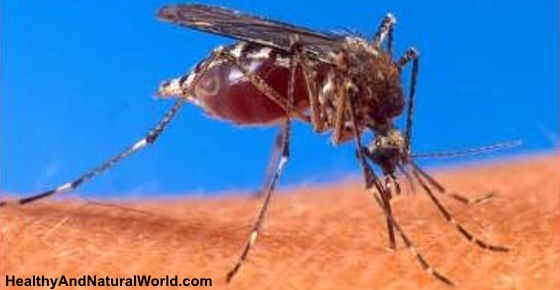 10 Natural Ways to Repel Mosquitoes