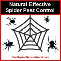 How to Make Natural Spider Spray