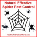 natural spider pest control