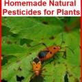 natural pesticides for plants