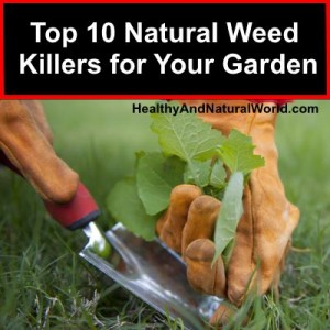 Top 10 Natural Weed Killers for Your Garden