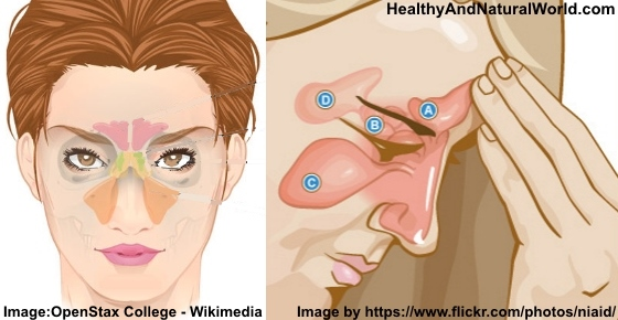 The Best Home Remedies For Sinus Infection
