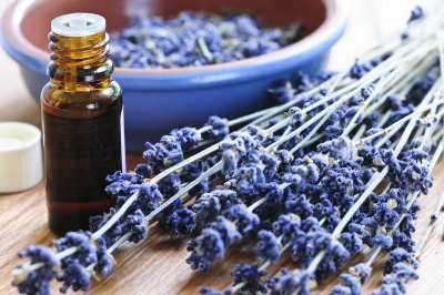 lavender essential oil for pain and inflammation