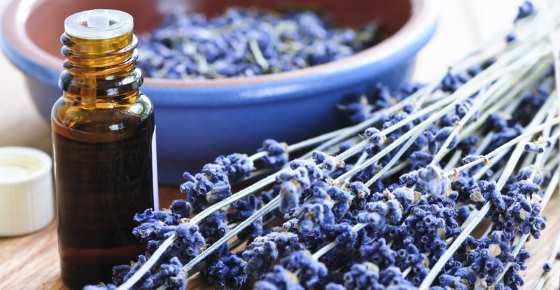 Lavender Oil: Uses and Benefits for Hair, Skin, and More