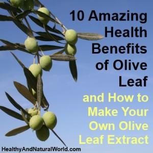 How to make olive leaf extract
