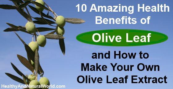 Make olive leaf extract