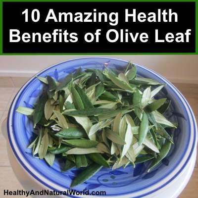 10 Amazing Health Benefits of Olive Leaf