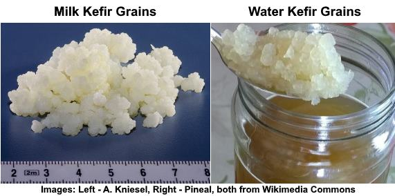 Water Kefir Grains vs Milk Kefir Grains