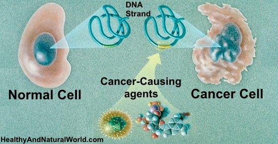Cancer Cells Could Die When You Eat These 10 Things