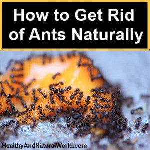 How To Get Rid Of Ants Cheaply And Naturally