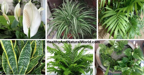 10 Best Air Filtering House Plants According To Nasa Inc
