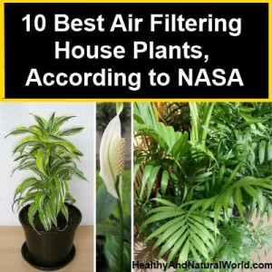 10 Best Air Filtering House Plants According To Nasa