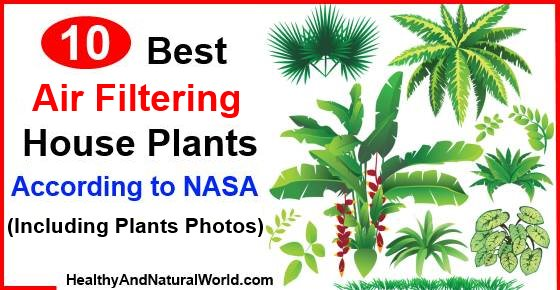 10 best air filtering house plants according to nasa for Nasa indoor plant list