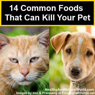 14 Common Foods that Can Kill Your Pet