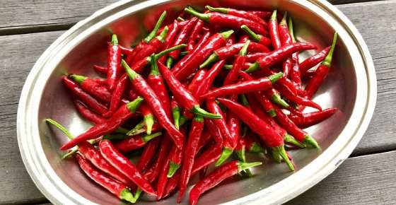 Scientifically Proven Health Benefits of Cayenne Pepper