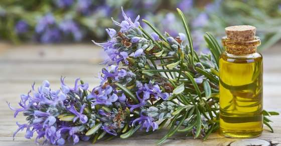 Rosemary (Essential) Oil: Benefits and Uses for Hair, Skin and More (Science Based)