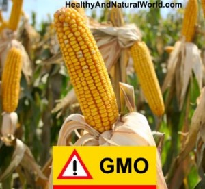 Major Study Links GMOs To Liver/Kidney Damage, Cancer and Severe Hormonal Disruptions