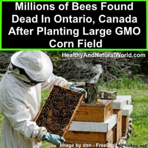 Millions of Bees Found Dead In Ontario, Canada After Planting Large GMO Corn Field