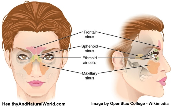 How To Use Grapefruit Seed Extract To Beat Sinus Infections
