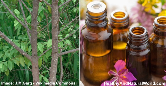 The Best Uses for Sandalwood Essential Oil