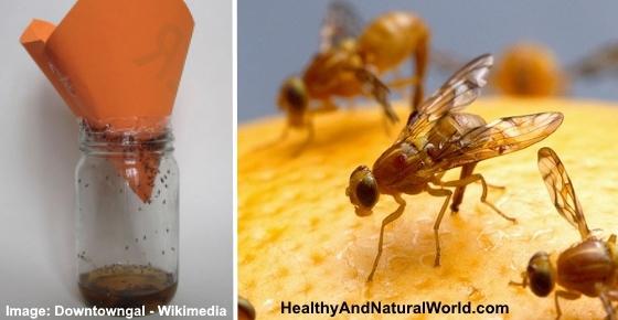 how to get rid of flies indoors