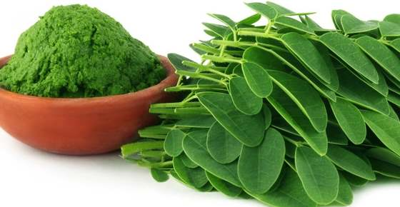 Proven Benefits of Moringa (Tea, Powder, Leaves)