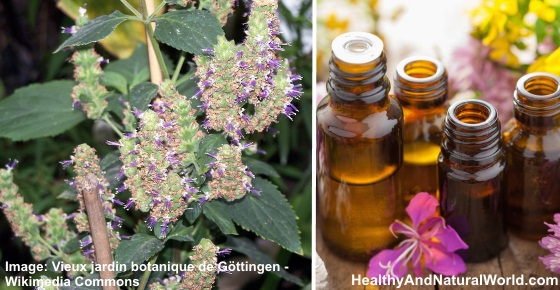 The Best Uses for Patchouli Essential Oil