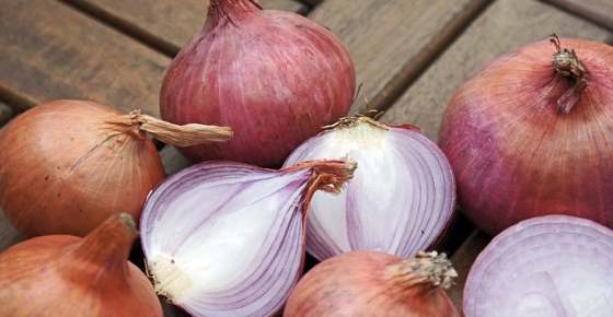 Onions: Are They Good for You, Nutrition Facts, Proven Benefits