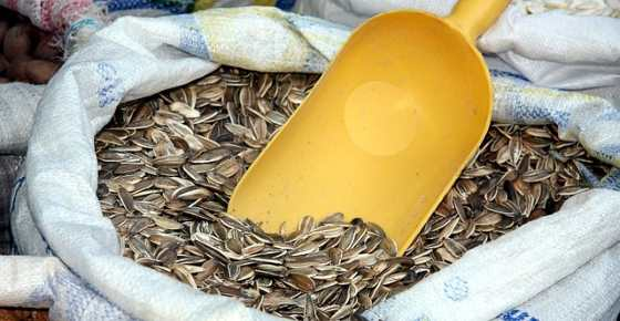 Sunflower Seeds: Calories, Are They Good for You, Side Effects, Proven Benefits