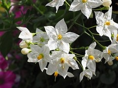 Bedroom Plants That May Help You Relax and Sleep Better: Jasmine, Lavender and More