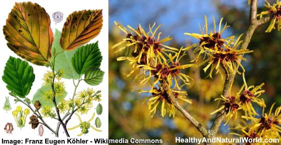 10 Uses of Witch Hazel for Great Health