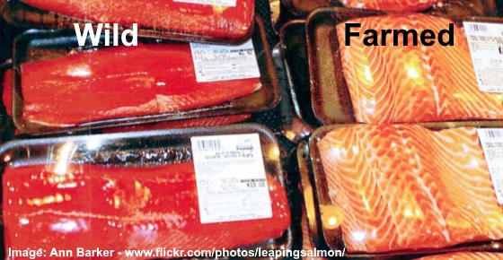 https://www.healthyandnaturalworld.com/farmed-salmon-vs-wild-salmon/