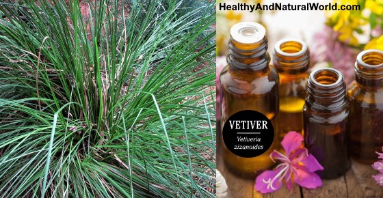 How to Use Vetiver Oil for Great Health