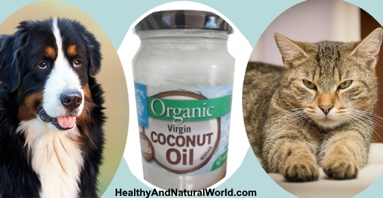 The Health Benefits Of Coconut Oil For Dogs and Cats