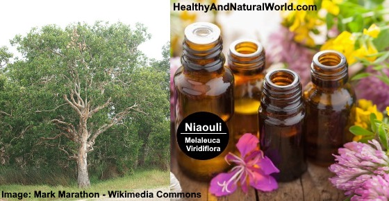 Health Benefits of Niaouli Essential Oil