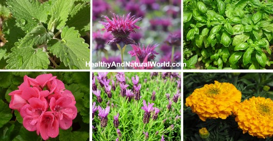 The Best 14 Plants that Repel Mosquitoes