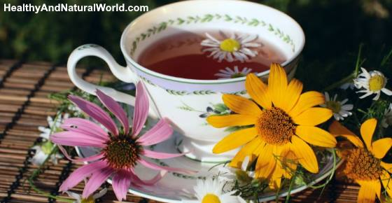 Echinacea Tea Benefits And How To Use It For Great Health