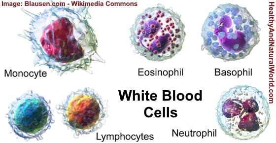 Leukocytes in Urine and Stool – Causes and Possible Solutions