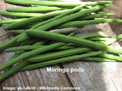 moringa-fresh-pods