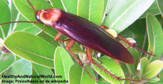 Palmetto Bug: What it is and How to Get Rid of It Quickly