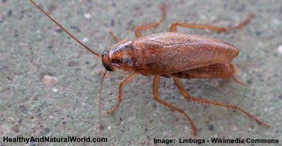 How to Get Rid of German Roaches: 6 Natural Ways That Really Work