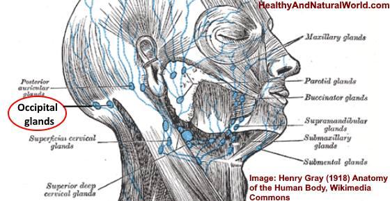 Swollen Occipital Lymph Node