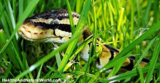 How to Keep Snakes Away: Effective Snake Repellents