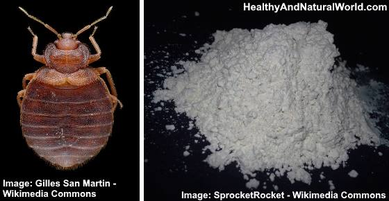 Bed Bug Powder How to Use It Effectively to Get Rid of Bed Bugs