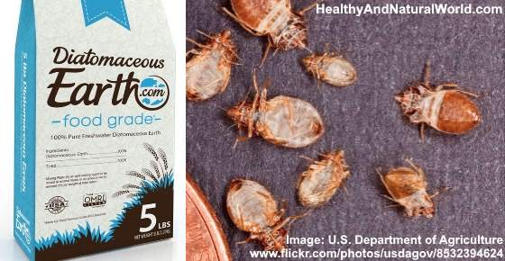 How to effectively kill bed bugs using diatomaceous earth de - How to use diatomaceous earth in the garden ...
