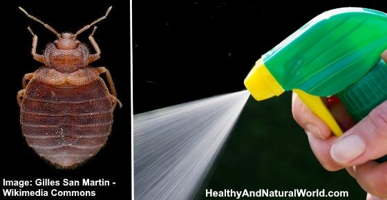 The Best Bed Bug Sprays to Kill Bed Bugs Fast