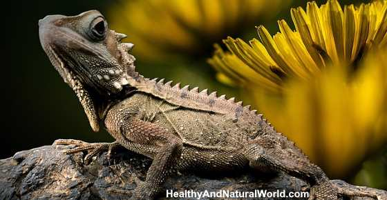How to Get Rid of Lizards Naturally