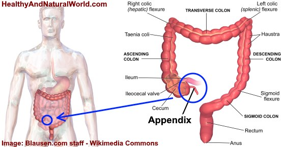 What Side Is Your Appendix On Including Appendicitis Symptoms