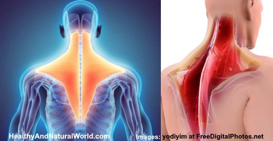 Trapezius Strain: Causes, Symptoms, and Effective Home Remedies to Relieve Pain