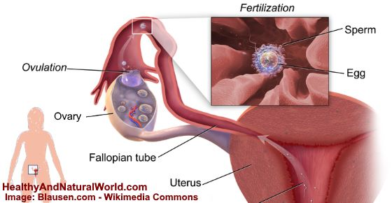 Ovulation Discharge: What It is and How It Looks Like